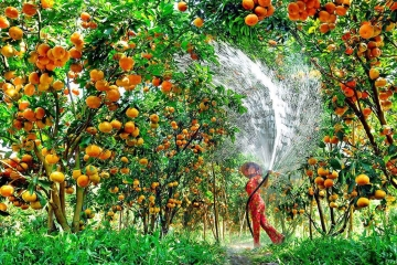 The ultimate guide to the best orchards in Southwest Vietnam