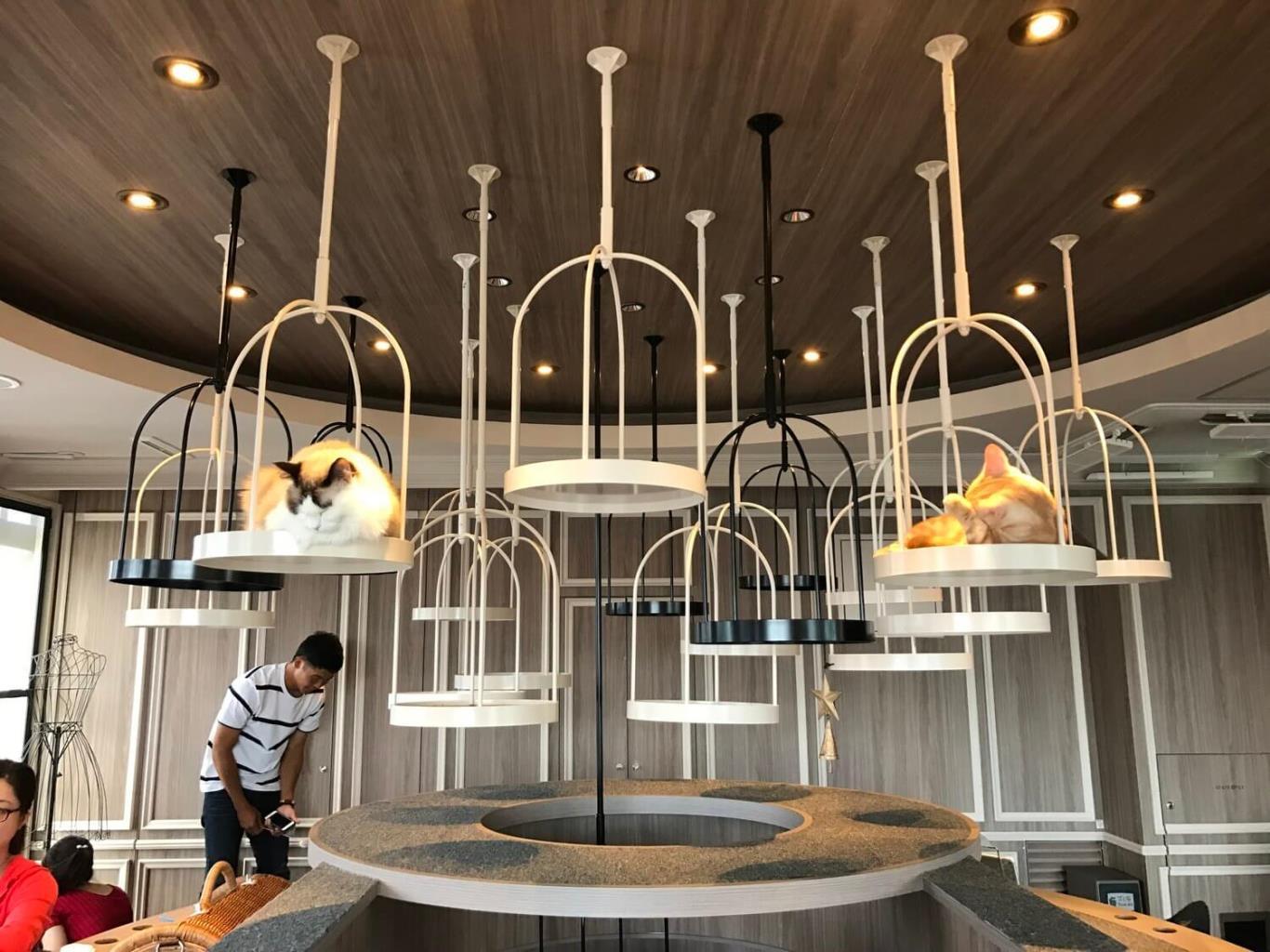 7 Best Animal Coffee Shops In Tokyo